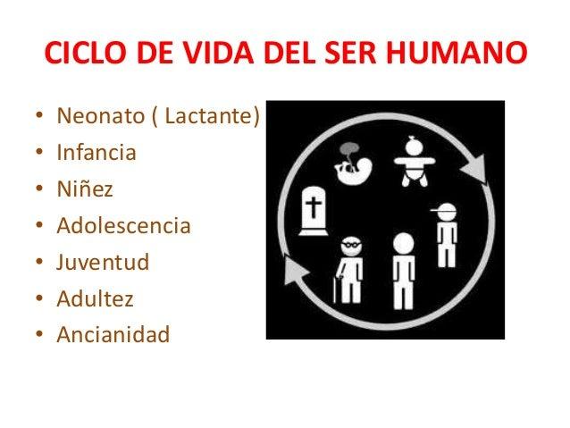 Ciclo Vital Del Ser Humano On Emaze: 15. Ciclo De Vida Del Ser Humano