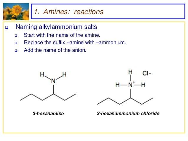 amine vs amide