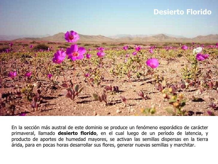 Desierto FloridoEn la sección más austral de este dominio se produce un fenómeno esporádico de carácterprimaveral, llamado...