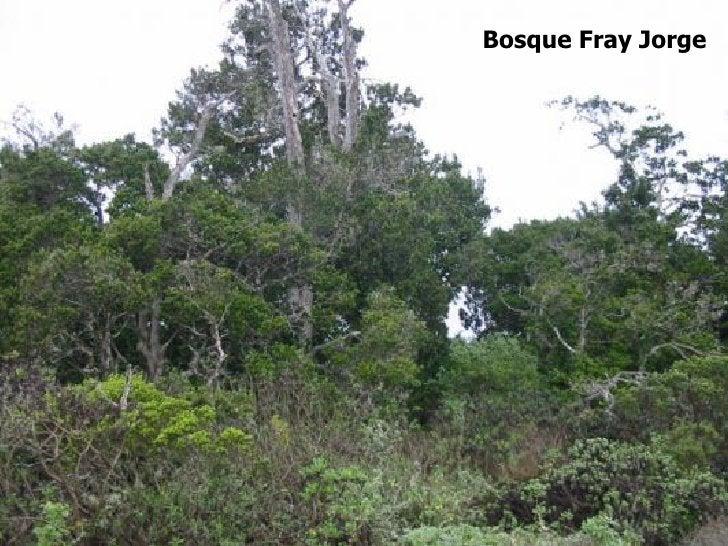 Bosque Fray Jorge