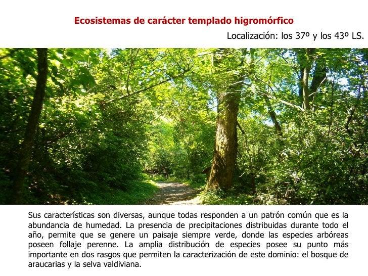 Ecosistemas de carácter templado higromórfico                                                     Localización: los 37º y ...