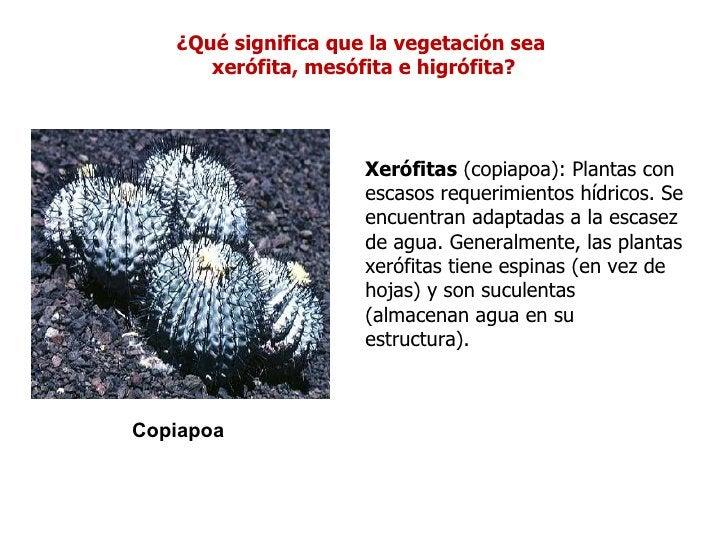 ¿Qué significa que la vegetación sea      xerófita, mesófita e higrófita?                     Xerófitas (copiapoa): Planta...
