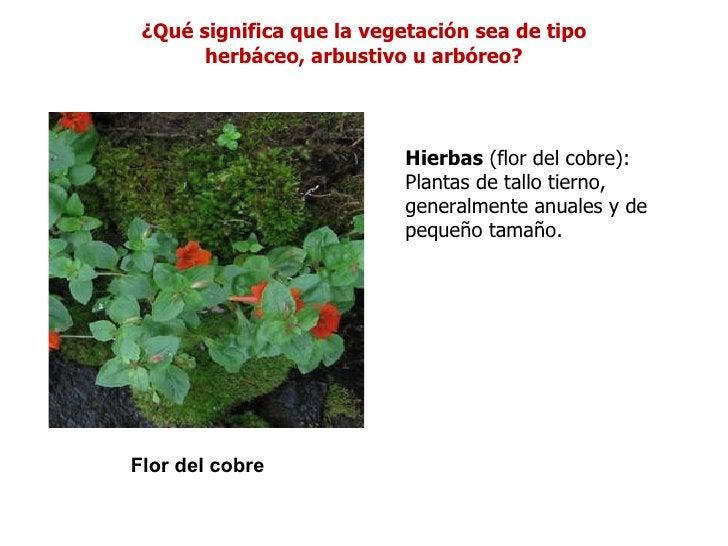 ¿Qué significa que la vegetación sea de tipo       herbáceo, arbustivo u arbóreo?                           Hierbas (flor ...