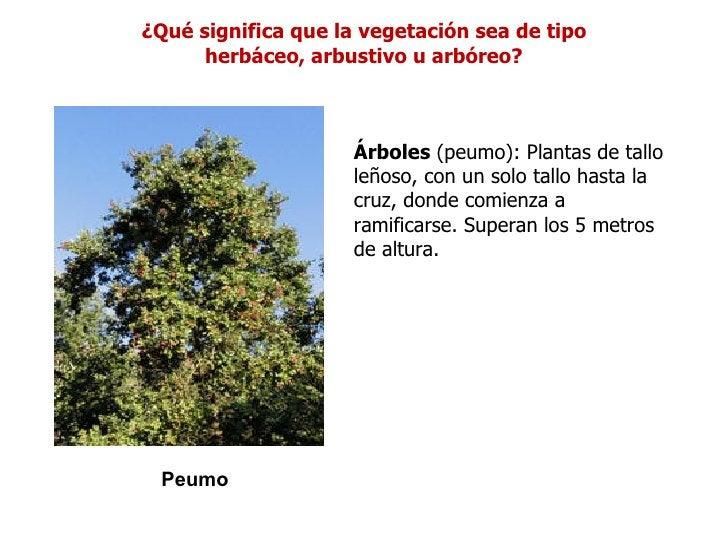 ¿Qué significa que la vegetación sea de tipo      herbáceo, arbustivo u arbóreo?                     Árboles (peumo): Plan...