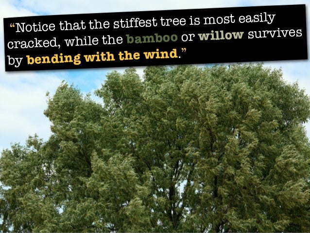 """""""Notice that the stiffest tree is most easily cracked, while the bamboo or willow survives by bending with the wind."""""""