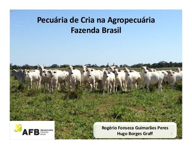 Pecuária de Cria na Agropecuária             Fazenda Brasil                          Rogério Fonseca Gui...