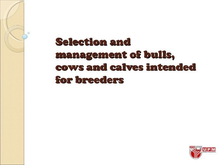 Selection and management of bulls, cows and calves intended for breeders