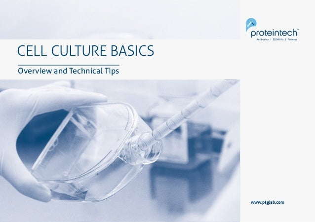 1Cell Culture Basics CELL CULTURE BASICS Overview and Technical Tips www.ptglab.com