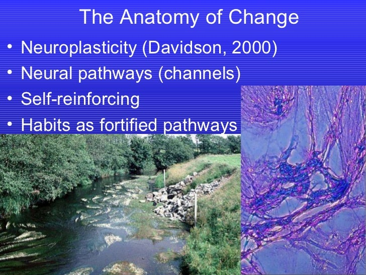 The Anatomy of Change <ul><li>Neuroplasticity (Davidson, 2000) </li></ul><ul><li>Neural pathways (channels) </li></ul><ul>...