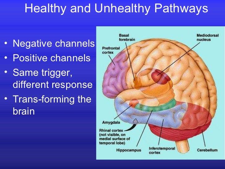 Healthy and Unhealthy Pathways <ul><li>Negative channels </li></ul><ul><li>Positive channels </li></ul><ul><li>Same trigge...