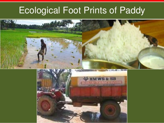 Ecological Foot Prints of Paddy