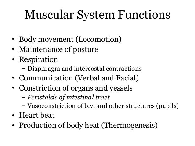 Muscular System Functions• Body movement (Locomotion)• Maintenance of posture• Respiration  – Diaphragm and intercostal co...