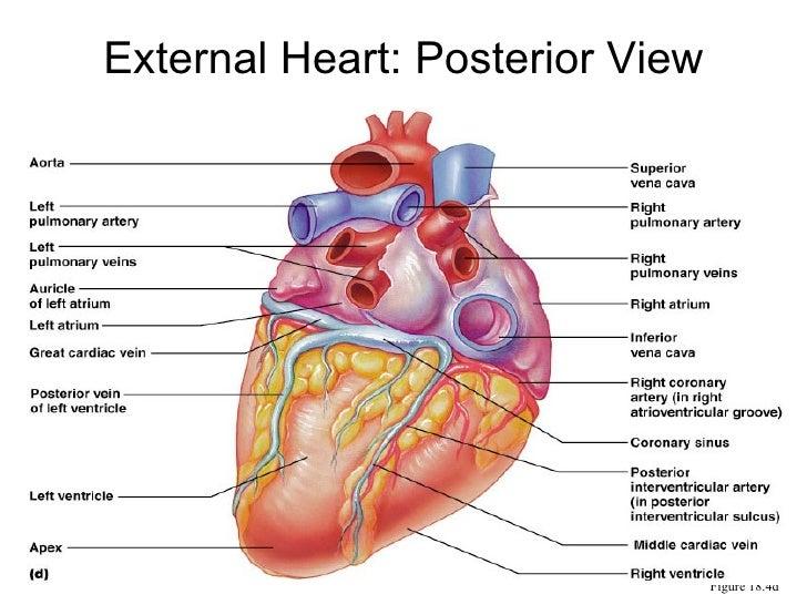 150 Heart