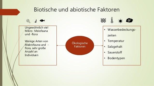 Beste Biotische Abiotischen Faktoren Arbeitsblatt Zeitgenössisch ...