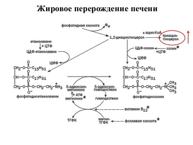Синтез липидов