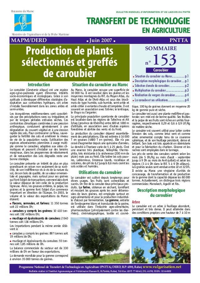 Introduction Le caroubier (Ceratonia siliqua) est une espèce agro-sylvo-pastorale ayant d'énormes intérêts socio-économiqu...