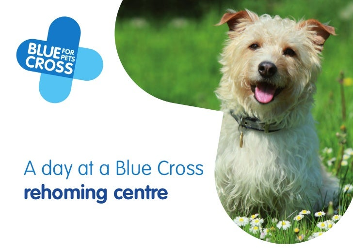 A day at a Blue Crossrehoming centre