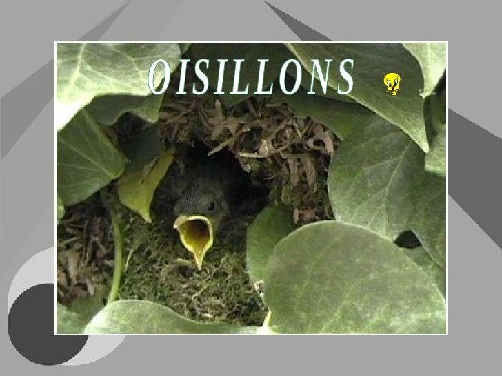 OISILLONS