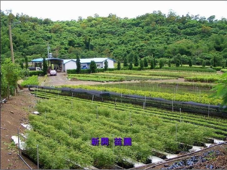 新開 苗圃