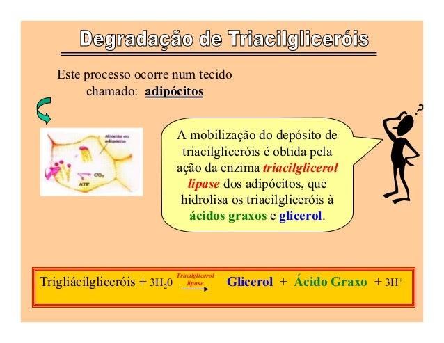 Este processo ocorre num tecido        chamado: adipócitos                             A mobilização do depósito de       ...