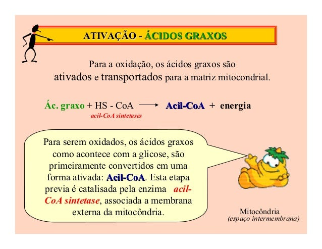 ATIVAÇÃO - ÁCIDOS GRAXOS         Para a oxidação, os ácidos graxos são  ativados e transportados para a matriz mitocondria...