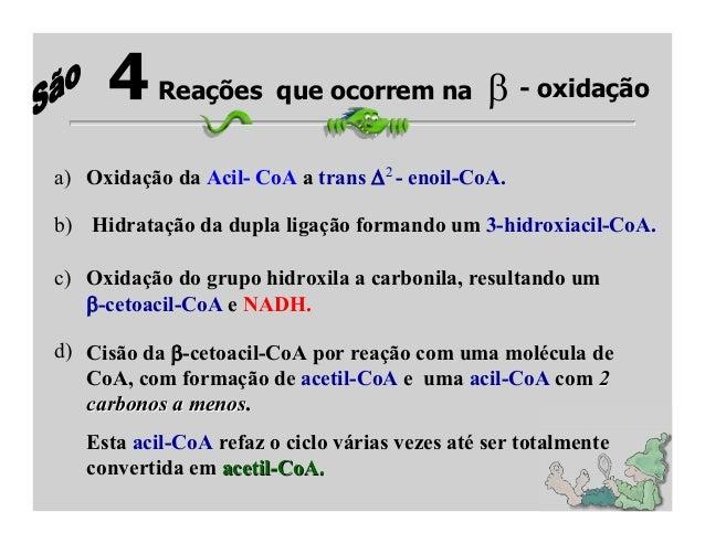4     Reações que ocorrem na                      - oxidação                                    2a) Oxidação da Acil- CoA ...