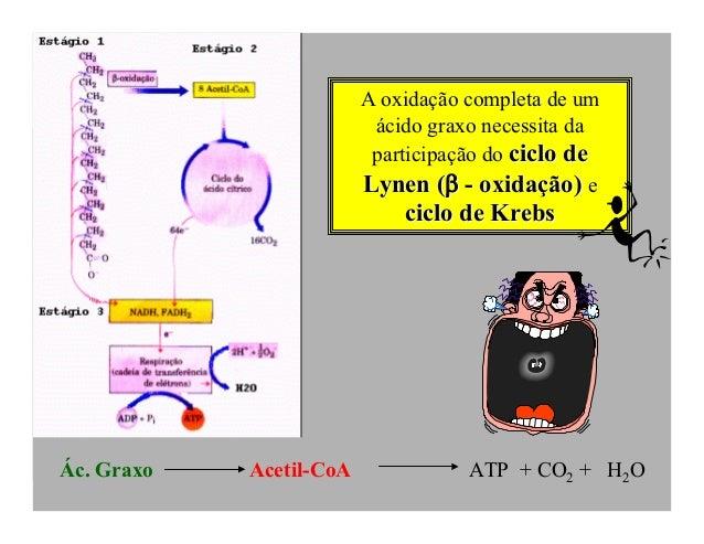 A oxidação completa de um                          ácido graxo necessita da                          participação do ciclo...