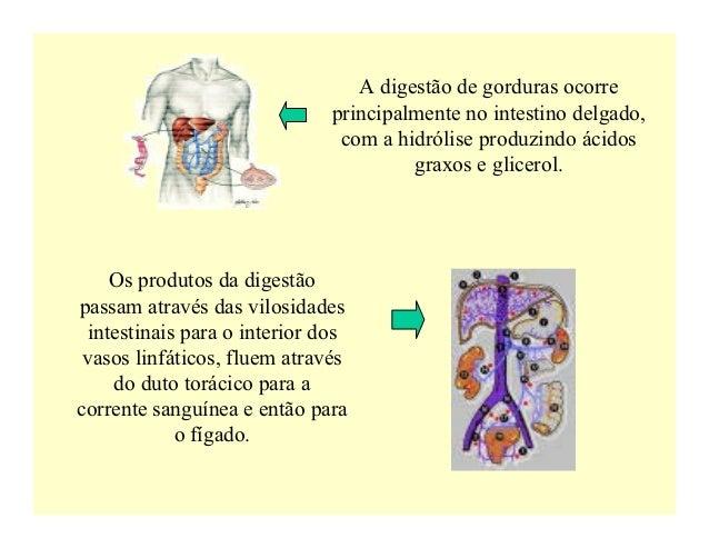 A digestão de gorduras ocorre                               principalmente no intestino delgado,                          ...