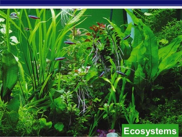 AP Biology Ecosystems