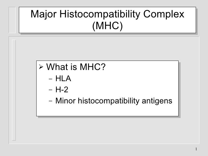 Major Histocompatibility Complex (MHC) <ul><li>What is MHC? </li></ul><ul><ul><li>HLA </li></ul></ul><ul><ul><li>H-2 </li>...