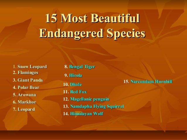 15 Most Beautiful             Endangered Species1. Snow Leopard   8. Bengal Tiger2. Flamingos                  9. Hirola3....