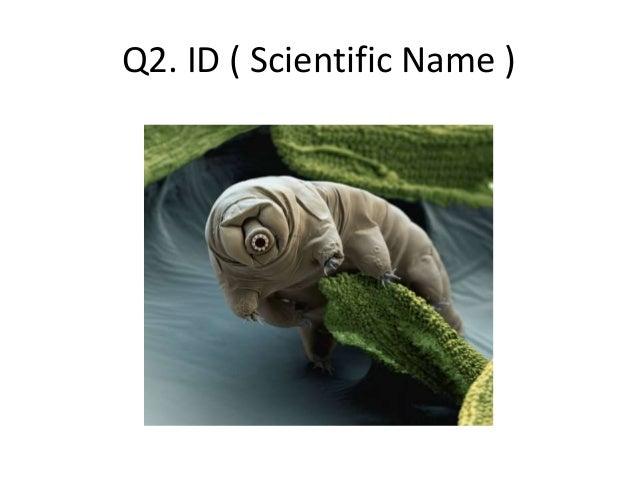 Q2. ID ( Scientific Name )
