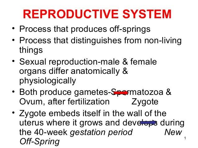 Non sexual reproductive organ