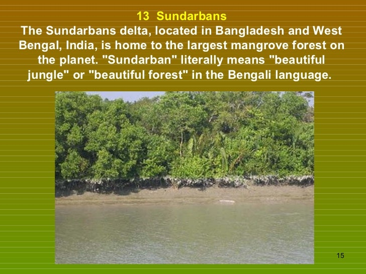 13  Sundarbans The Sundarbans delta, located in Bangladesh and West Bengal, India, is home to the largest mangrove forest ...