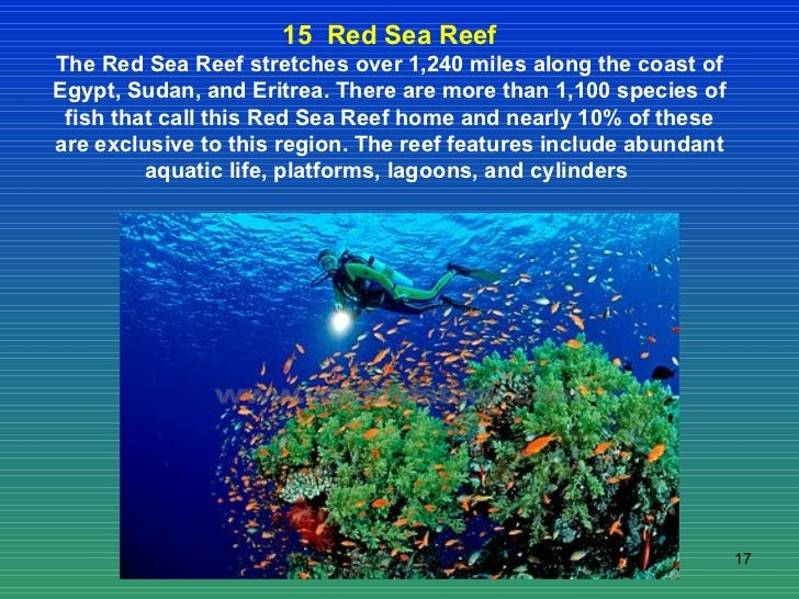 15  Red Sea Reef The Red Sea Reef stretches over 1,240 miles along the coast of Egypt, Sudan, and Eritrea. There are more ...