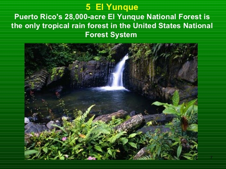 5  El Yunque Puerto Rico's 28,000-acre El Yunque National Forest is the only tropical rain forest in the United States Nat...