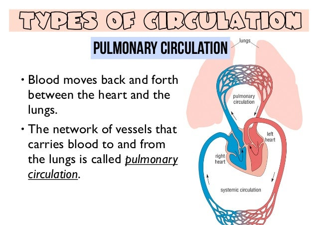 how to help blood circulation