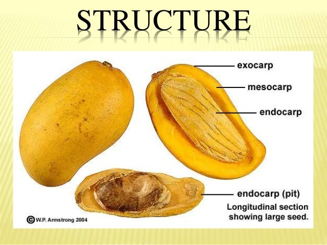 Fruits Parts And Classification