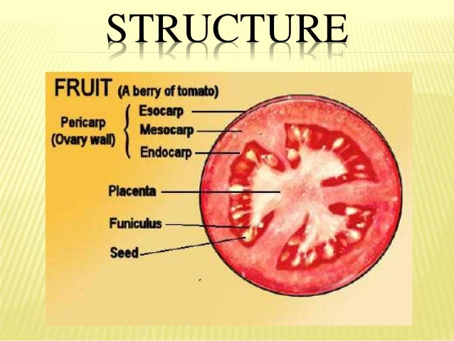 fruits parts and classification 9 638