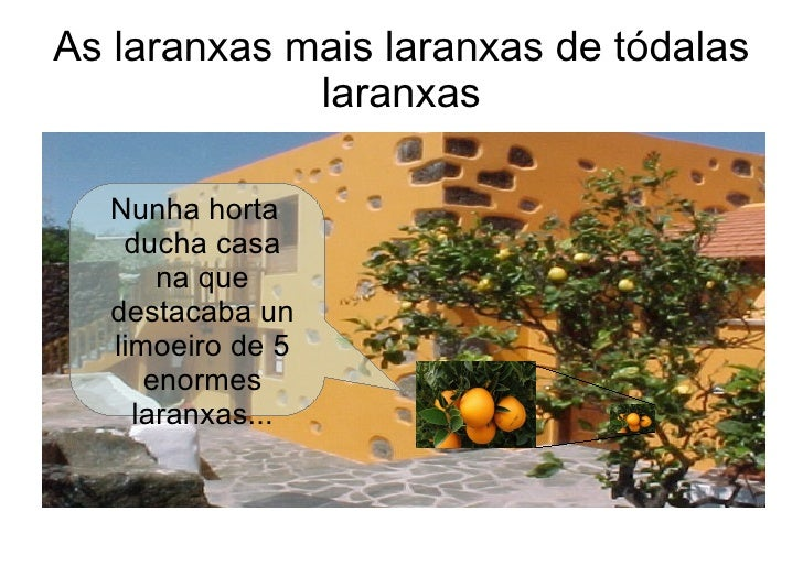As laranxas mais laranxas de tódalas             laranxas  Nunha horta   ducha casa      na que  destacaba un  limoeiro de...