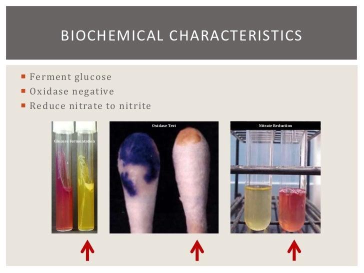16 Chapter 19 Enterobacteriaceae