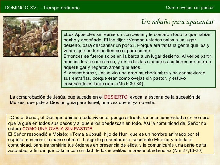 DOMINGO XVI – Tiempo ordinario                                                Como ovejas sin pastor                      ...