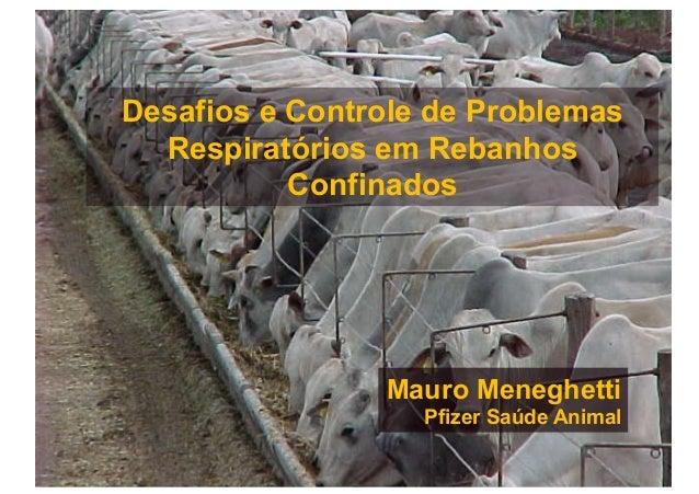 Desafios e Controle de Problemas  Respiratórios em Rebanhos           Confinados                Mauro Meneghetti          ...