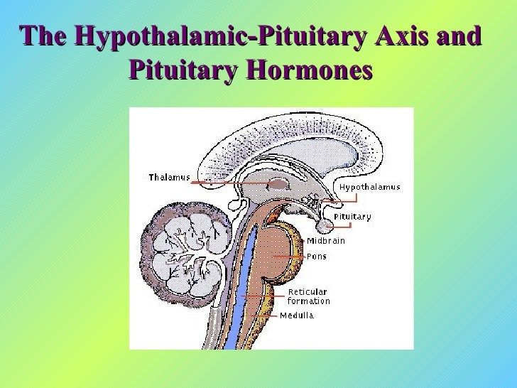 The Hypothalamic-Pituitary Axis and Pituitary Hormones