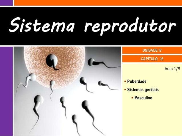 Sistema reprodutor                      UNIDADE IV                     CAPÍTULO 16                                   Aula ...