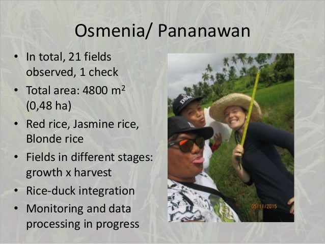 Osmenia/ Pananawan • In total, 21 fields observed, 1 check • Total area: 4800 m2 (0,48 ha) • Red rice, Jasmine rice, Blond...