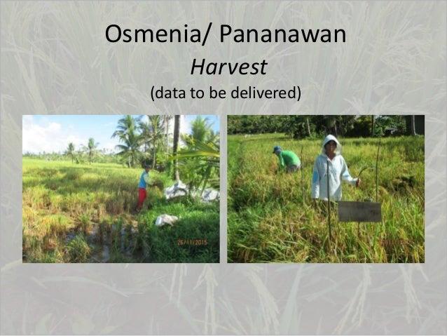 Osmenia/ Pananawan Harvest (data to be delivered)