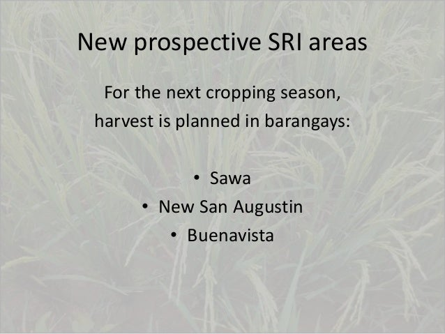 New prospective SRI areas For the next cropping season, harvest is planned in barangays: • Sawa • New San Augustin • Buena...