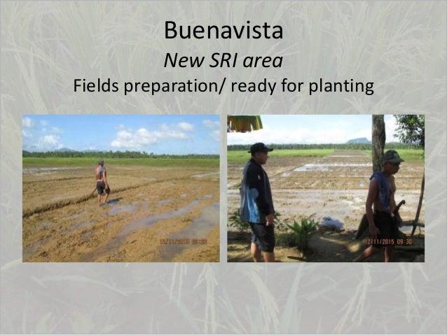 Buenavista New SRI area Fields preparation/ ready for planting