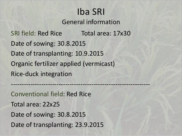 Iba SRI General information SRI field: Red Rice Total area: 17x30 Date of sowing: 30.8.2015 Date of transplanting: 10.9.20...